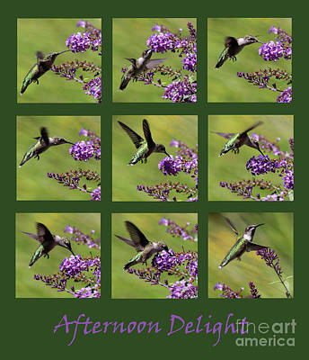 Photograph - Afternoon Delight Green by Karen Adams