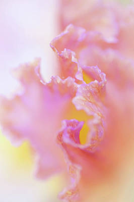 Photograph - Afternoon Delight Macro 1. The Beauty Of Irises by Jenny Rainbow