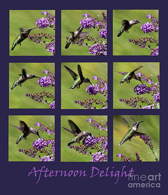 Photograph - Afternoon Delight Purple by Karen Adams