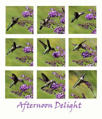 Photograph - Afternoon Delight With A Hummingbird by Karen Adams