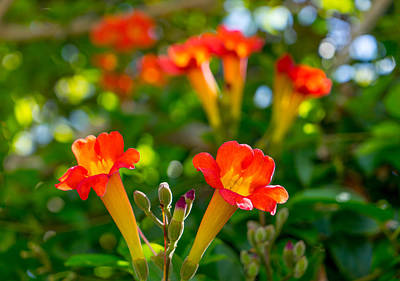 Photograph - Afternoon Flowers by Derek Dean