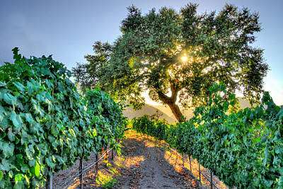 Photograph - Afternoon In The Vineyard by Derek Dean