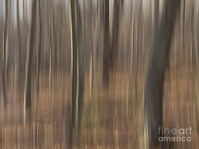 Photograph - Afternoon In The Woods II by Lili Feinstein