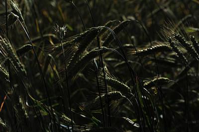 Photograph - Afternoon Light by Randi Grace Nilsberg