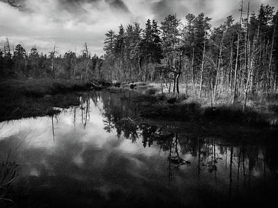 New Jersey Pine Barrens Photograph - Afternoon Photo At Franklin Parker Preserve by Louis Dallara