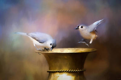 Tufted Titmouse Photograph - Afternoon Playtime by Jai Johnson