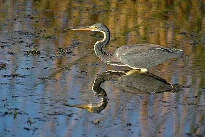Photograph - Afternoon Reflection by Dawn Currie
