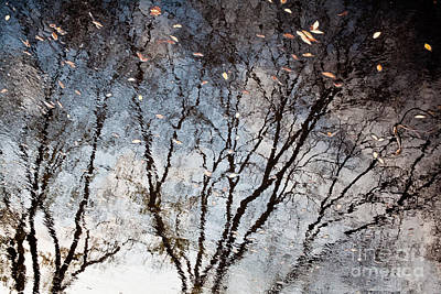 Afternoon Reflection II Art Print by Derek Selander