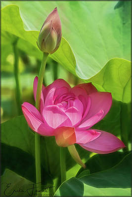Photograph - Afternoon Sun On Lotus by Erika Fawcett