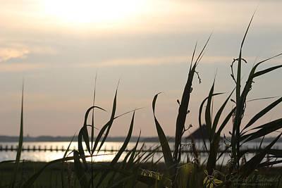 Photograph - Afternoon Sun by Robert Banach