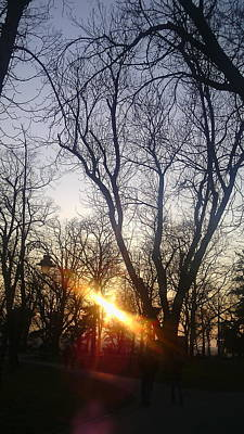 Afternoon Sunlight In Belgrade Kelemegdan Park Original by Anamarija Marinovic