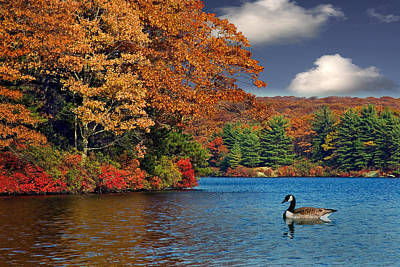 Autumn Photograph - Afternoon Swim by Susan Candelario