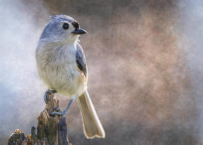 Titmouse Digital Art - Afternoon Titmouse by Bill Tiepelman