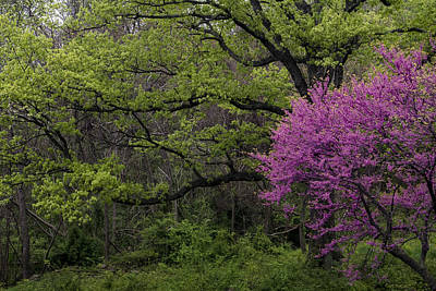 Afton Virginia Spring Red Bud Art Print by Kevin Blackburn