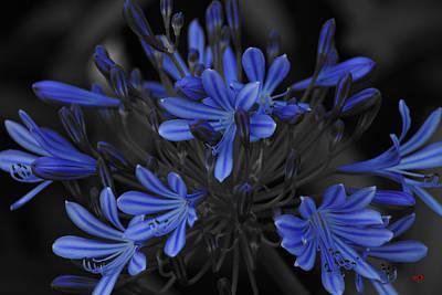 Studio Grafika Zodiac - Aga Feeling Blue by Lorenzo Williams