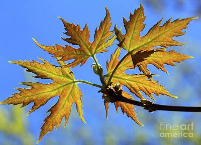 Photograph - Against The Autumn Blue Sky by Jimmy Ostgard