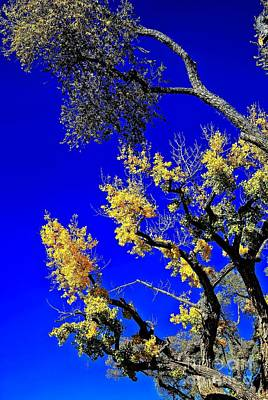Photograph - Against The New Mexico Sky by Jon Burch Photography
