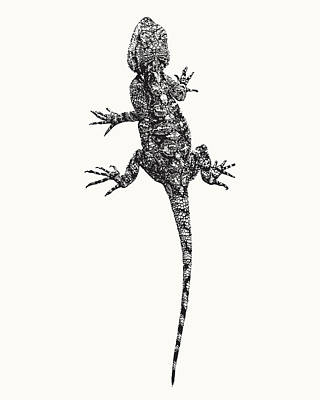 Photograph - Agama Lizard In Graphic Monochrome by Scotch Macaskill