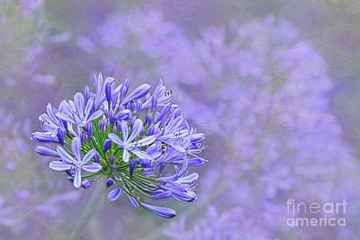 Photograph - Agapantha Lilac Pastel By Kaye Menner by Kaye Menner