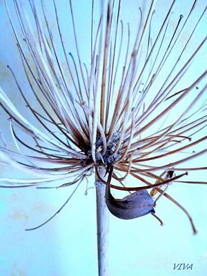 Photograph - Agapanthus Au Naturel by VIVA Anderson