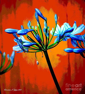 Modern Poster Photograph - Agapanthus by Christine Zipps
