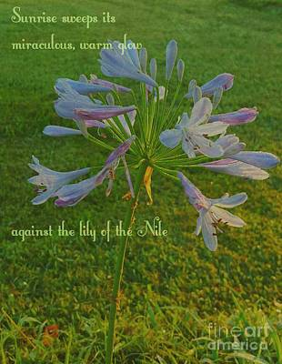 Agapanthus Dawn Original by ARTography by Pamela Smale Williams