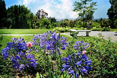 Photograph - Agapanthus In The Rose Garden by Lynn Bauer