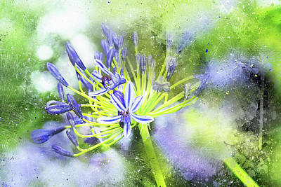 Photograph - Agapanthus Perfection by Kay Brewer