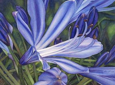 Agapanthus Painting - Agapanthus by Sandy  Haight