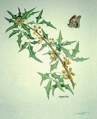 Painting - Agarita - Berberis Trifoliata by Michael Earney