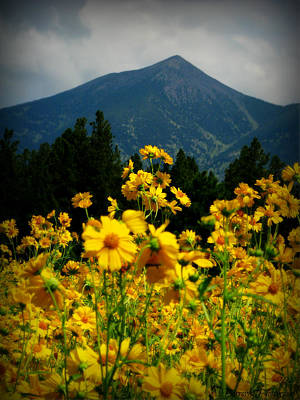 Agassiz Peak High Above The Meadow Art Print