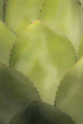 Photograph - Agave 1686-111417-1cr by Tam Ryan