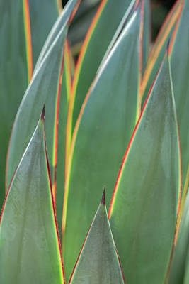 Photograph - Agave 3140-032518-1 by Tam Ryan