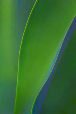 Photograph - Agave Abstract by Carolyn Derstine