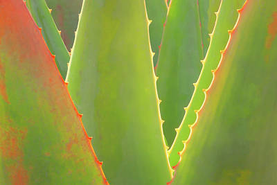 Photograph - Agave Abstract by Ram Vasudev