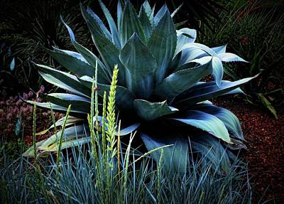 Photograph - Agave Americana by Diana Mary Sharpton