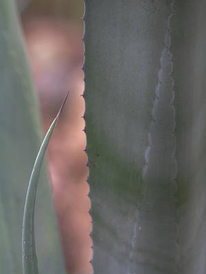 Photograph - Agave Cactus Abstract by Tam Ryan