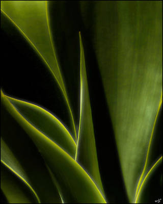 Photograph - Agave by Chris Lord