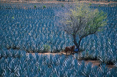 Agave Art Print by Christian Heeb