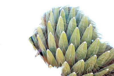 Photograph - Agave Dog by Greg Wickenburg