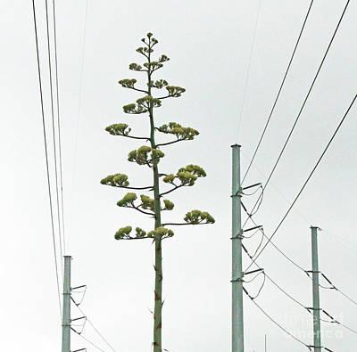 Art By Jake Photograph - Agave Electric Coop by Joe Jake Pratt