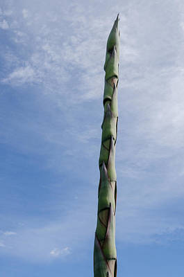 Photograph - Agave Flower Spike. by Rob Huntley