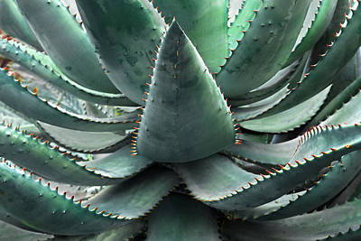 Photograph - Agave by Gill Billington