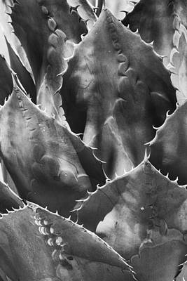 Photograph - Agave In Black And White  by Saija Lehtonen