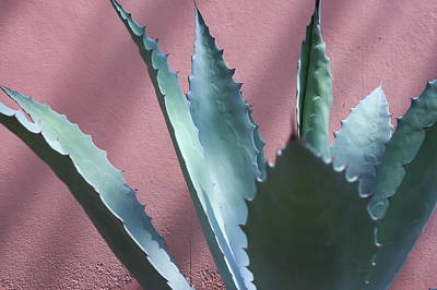 Photograph - Agave by Inter Mari