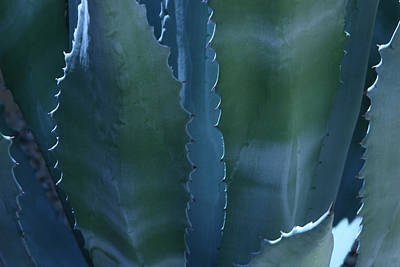 Agave Art Print by Jerry Cave