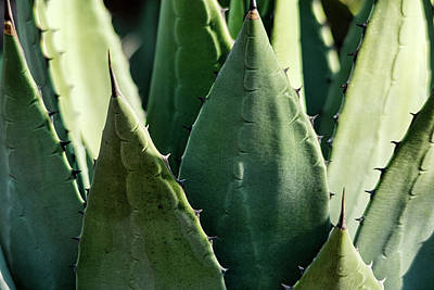 Photograph - Agave Leaves  by Saija Lehtonen