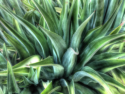 Photograph - Agave by Lynn Geoffroy