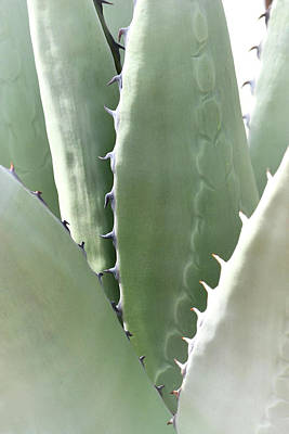 Photograph - Agave by Nadalyn Larsen
