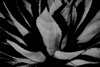 Photograph - Agave Night by Ross Odom